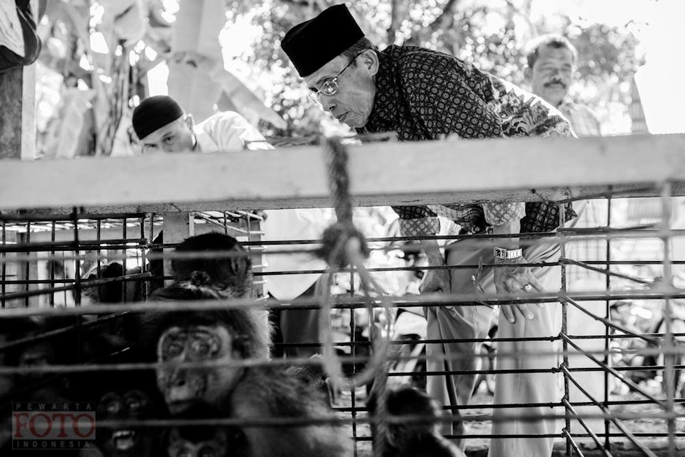 Dagang Monyet