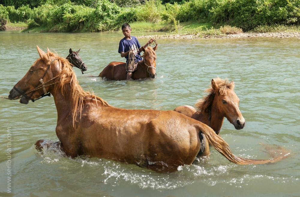 Seorang bocah memandikan kuda di sebuah sungai di Sumba Bart Daya.