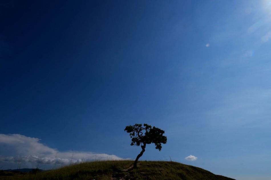 Padang savana pulau Rinca